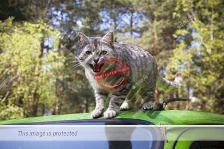 Katze auf einem Autodach
