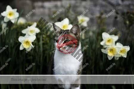 Katzenschreck verhindert Aufenthalt im Garten