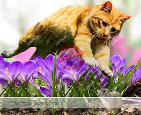 Katzenabwehr im Blumenbeet