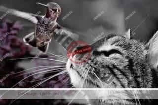 Jungvögel durch Abwehr von Katzen schützen