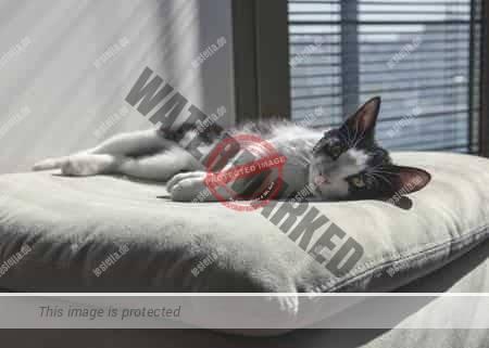 Katzenschreck für die Wohnung